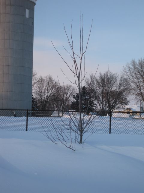 winter31