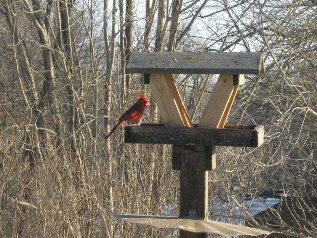 Same Cardinal