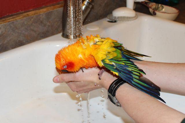 Parrot4