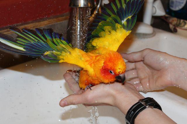 Parrot7